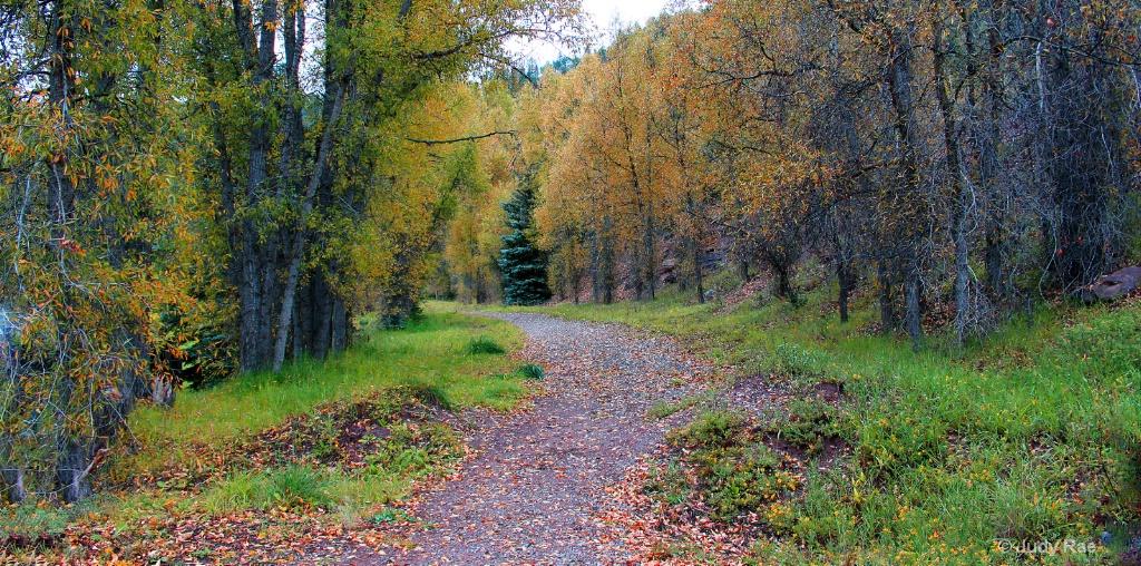 Autumn Trail - ID: 15535298 © Judy Rae