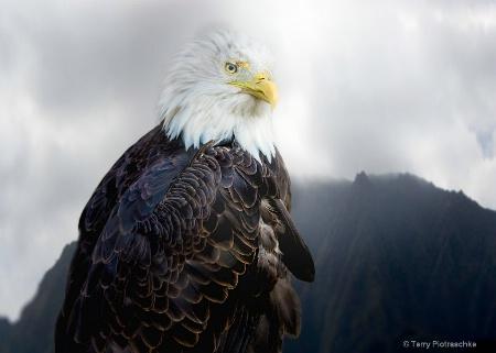 An Eagles Life