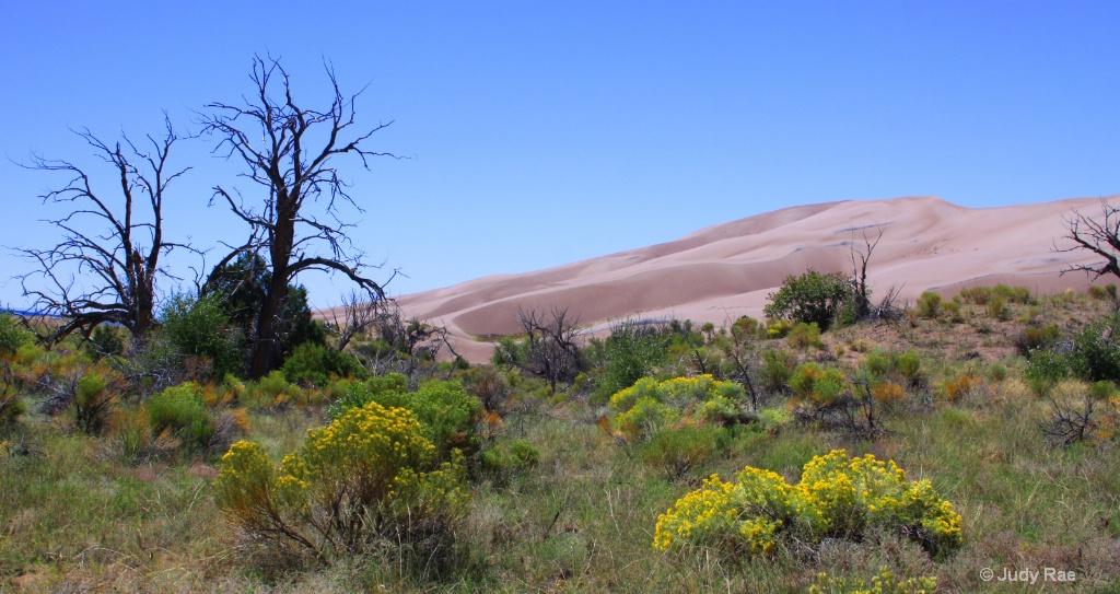 Great Sand Dunes N.P. Colorado - ID: 15541821 © Judy Rae