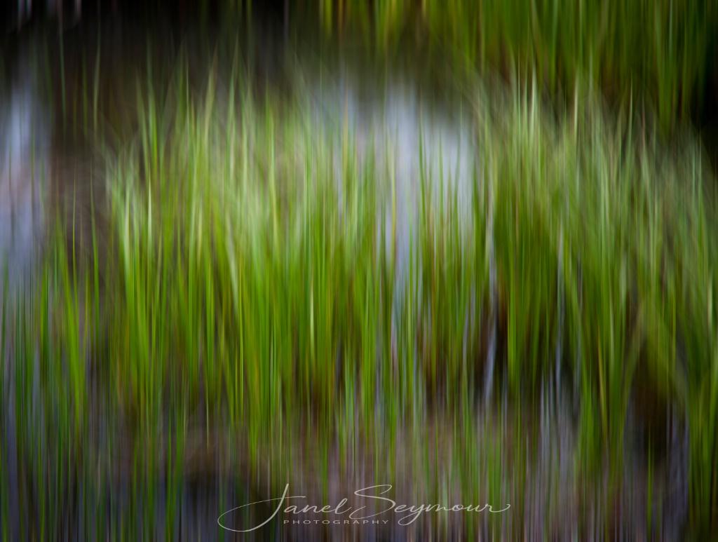 Marsh - ID: 15541895 © Janel Seymour