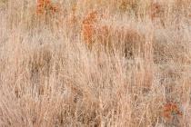 Golden Grasses Of Autumn