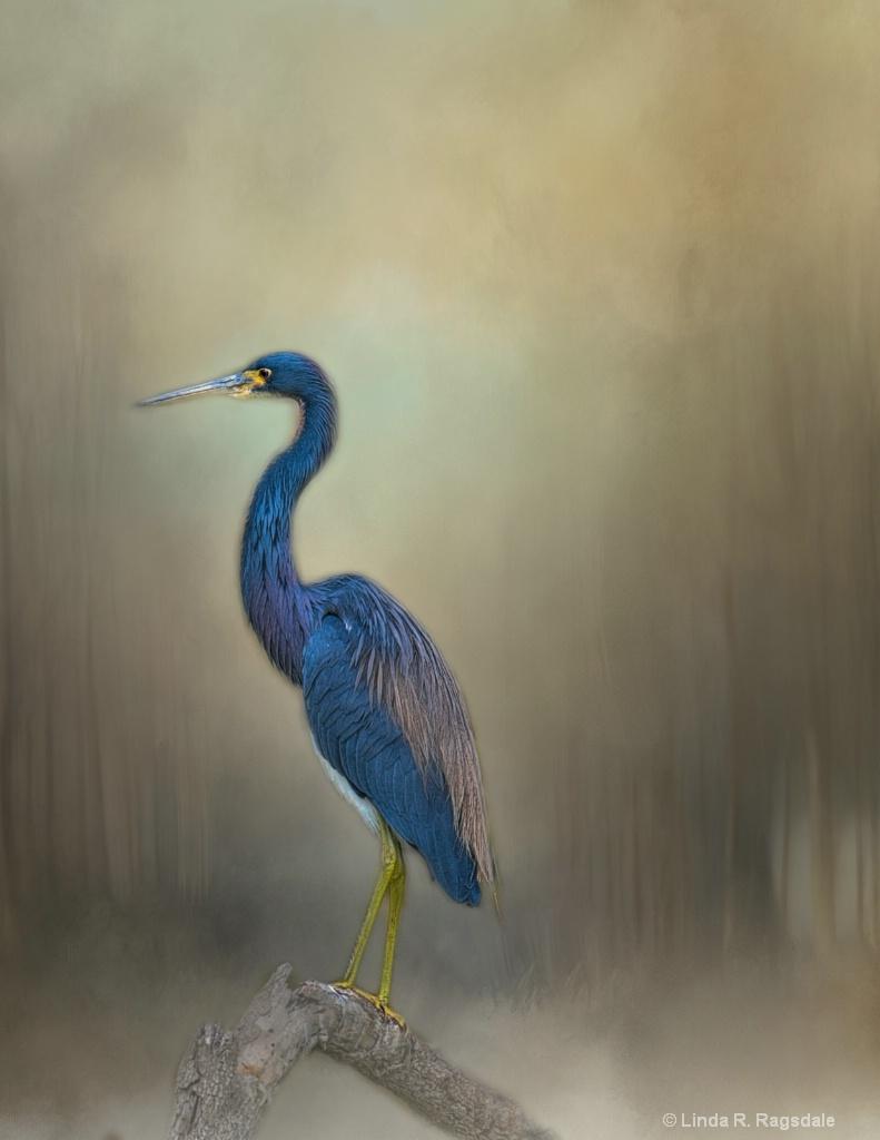 Blue Heron - ID: 15545853 © Linda R. Ragsdale