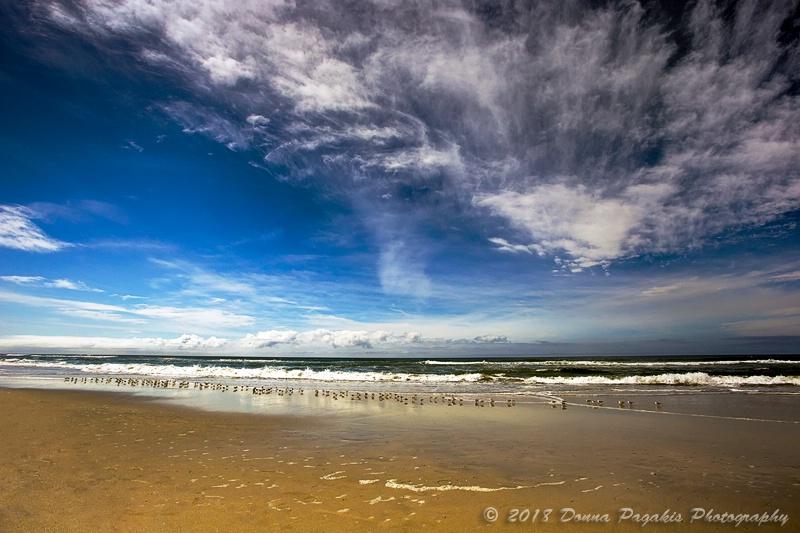 Seaside Sandpipers