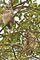 Owls, Charlotte, NC