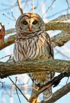 Owl 3, Charlotte, N.C.