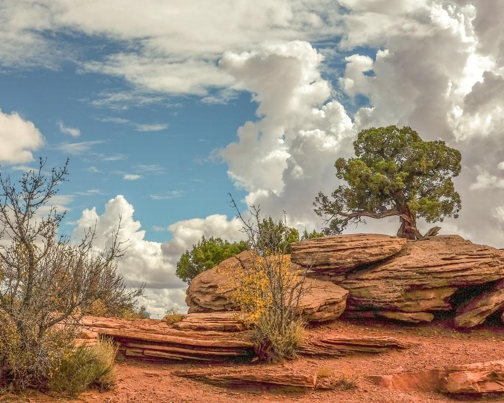 lone tree in petrified dunes - ID: 15549757 © Nancy Auestad