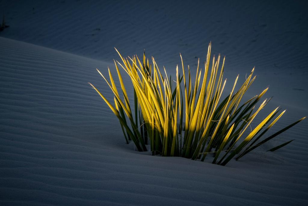 Sun and Shadow - ID: 15549911 © Jim E. Anderson