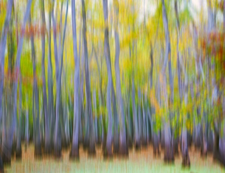 Cypress Abstract