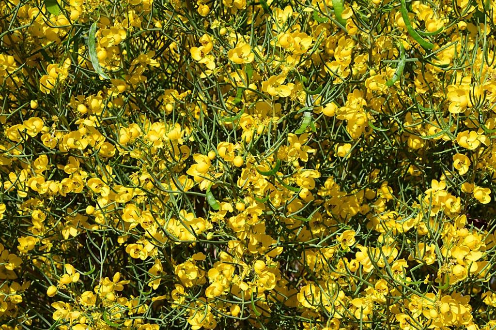 Springtime in Green Valley, Arizona - ID: 15553484 © William S. Briggs