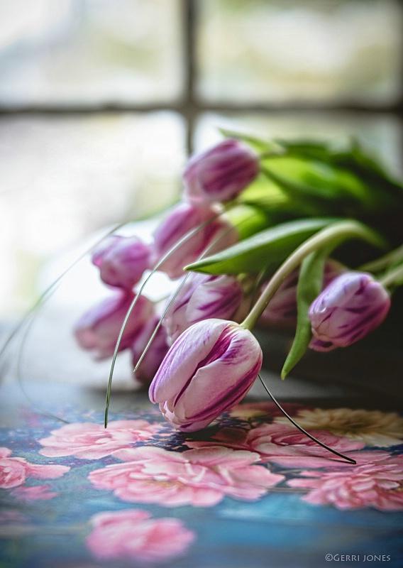 Tulip Bouquet In Window Light