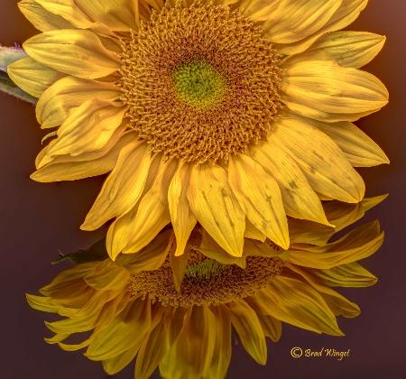 Kansas Flower