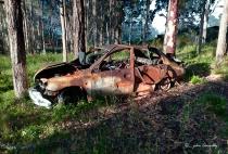 A Car in the Bush