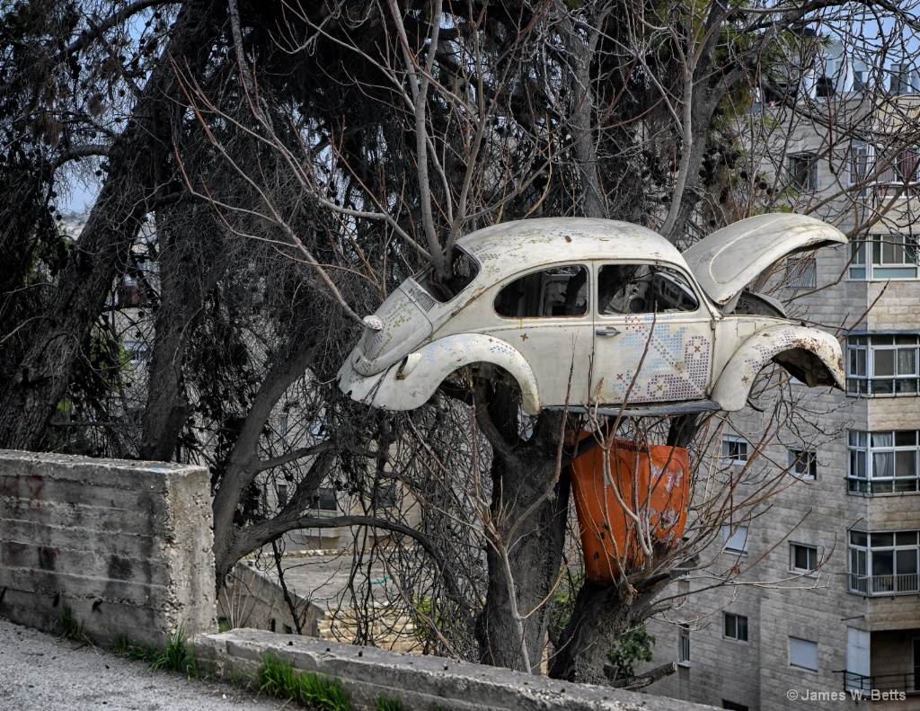 Bug on Tree - ID: 15556636 © James W. Betts