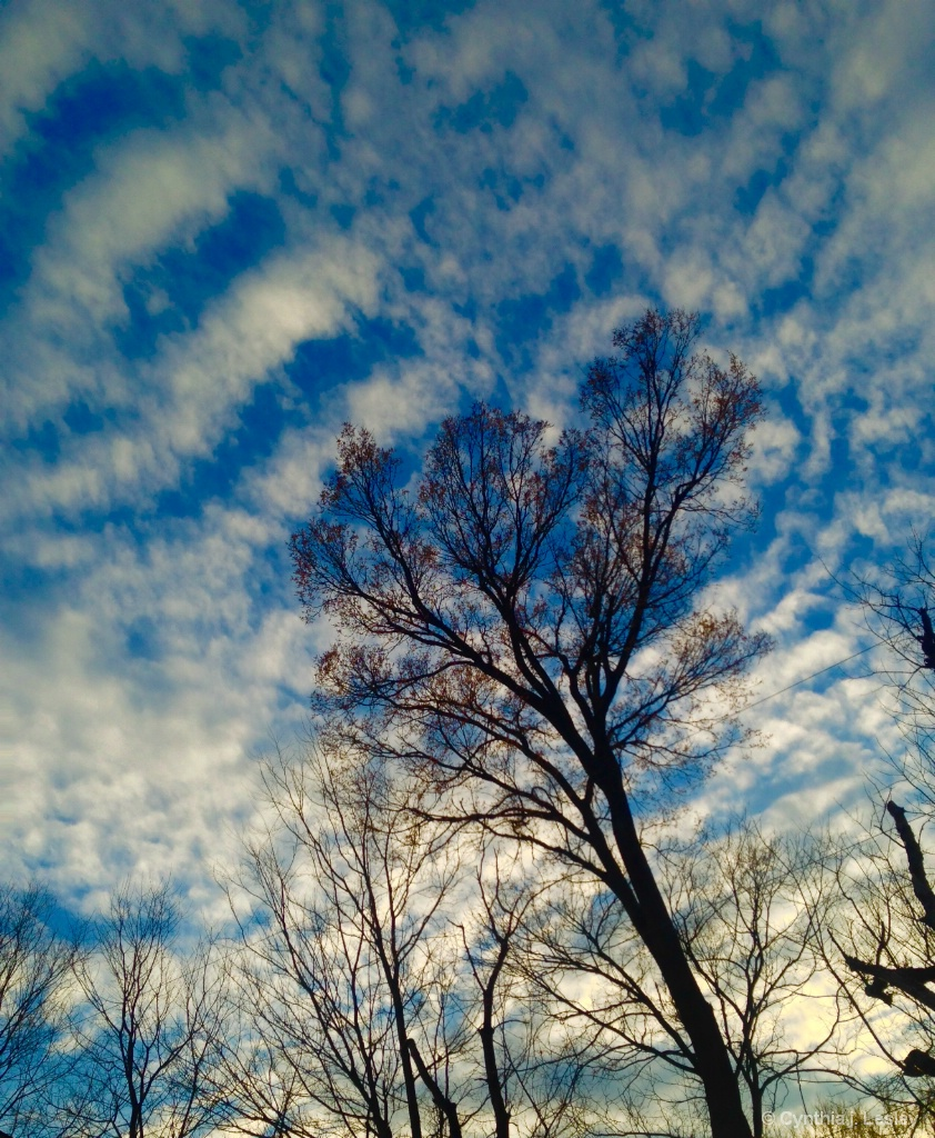 Tree meets the sky