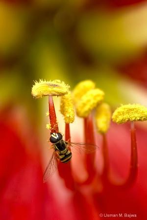 Close-up at Nature
