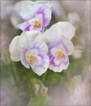 Pansy Watercolor