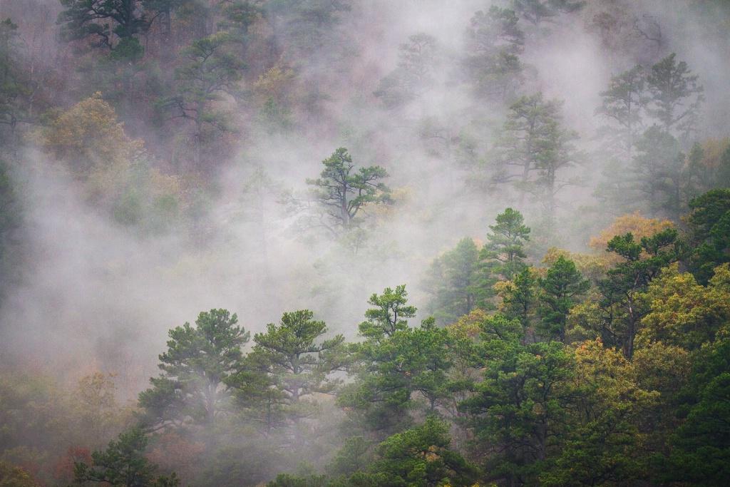 November Dreaming - ID: 15559217 © Jim E. Anderson