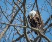Friendly Eagle Wa...
