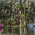 2Magnolia Gardens, Charleston - ID: 15561917 © Fran  Bastress