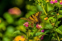 Wings and Nectar.