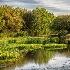 2Harris Neck Wildlife Refuge, Georgia - ID: 15562135 © Fran  Bastress