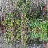 2Magnolia Gardens, Charleston - ID: 15562138 © Fran  Bastress
