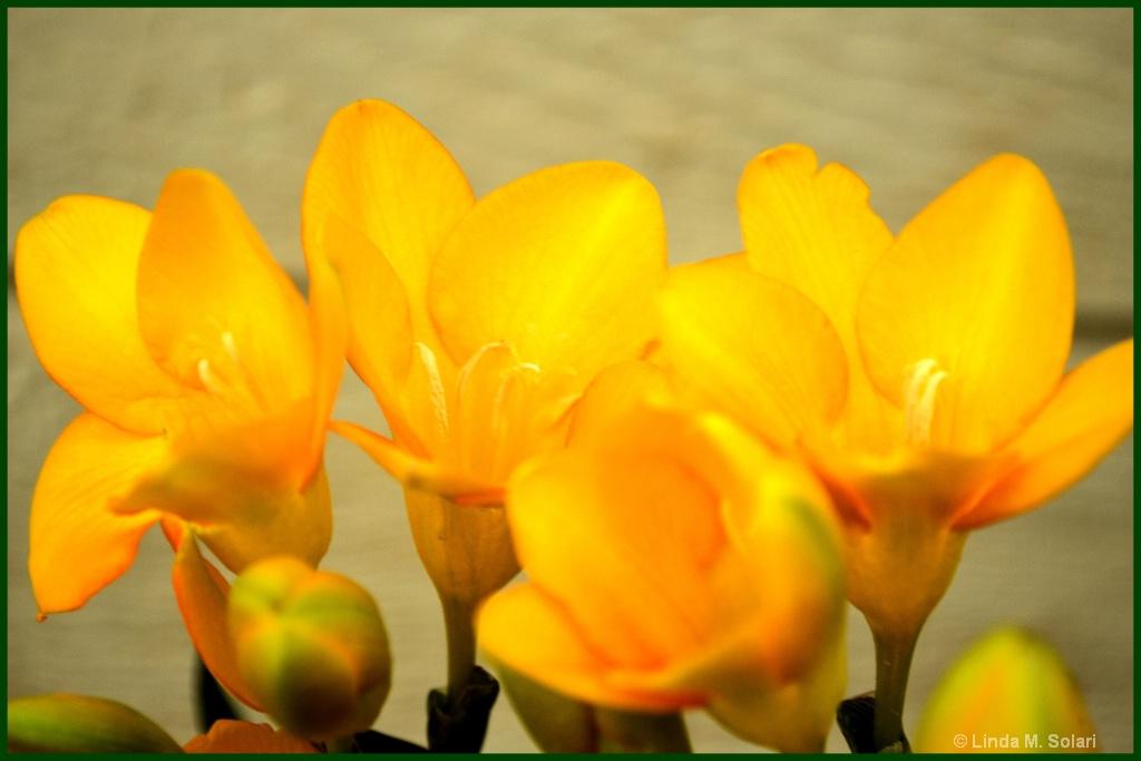 Heavenly Scented  - ID: 15562842 © Linda M. Solari