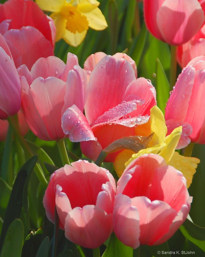 Nature's Bouquet - ID: 15562872 © Sandra K. StJohn