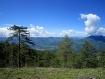 Mountain, Pine Tr...