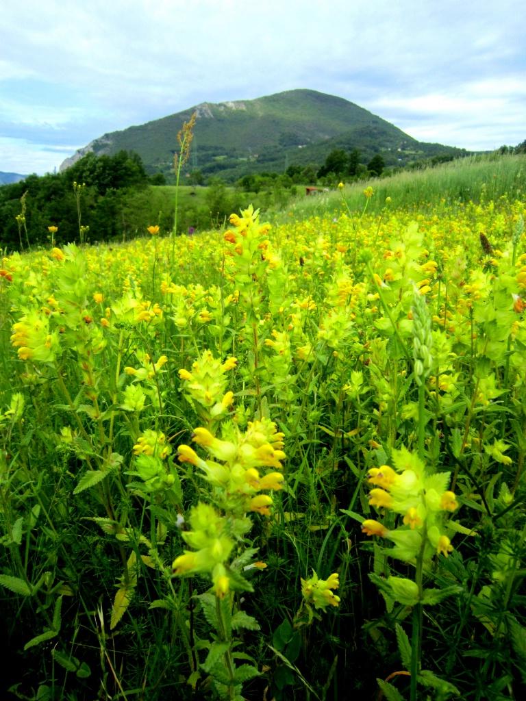 Flowering Mountain