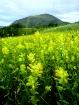 Flowering Mountai...