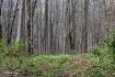 5 Mile Wood