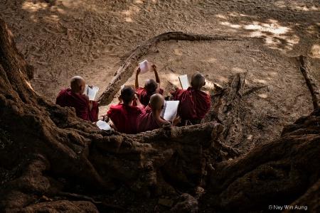 Yong Buddist Novice Monks