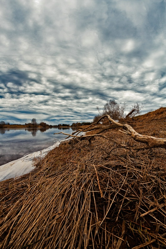 Dead Branch On The River Bend