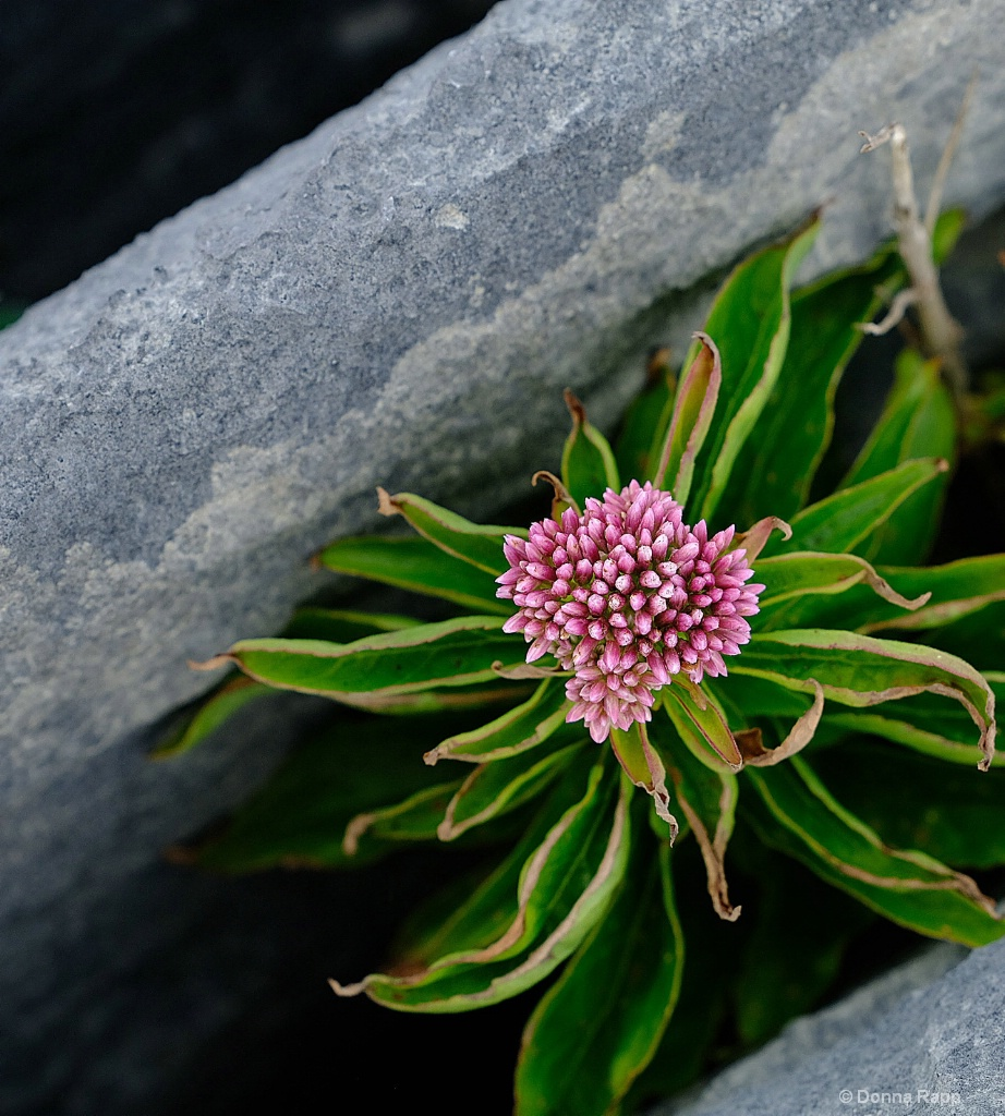 Life Persists - ID: 15572731 © Donna Rapp