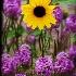 © Trudy L. Smuin PhotoID# 15572924: ~ Wild Flowers ~