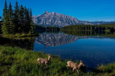 2 Jack Lake