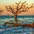 2Botany Bay, South Carolina - ID: 15573229 © Fran  Bastress