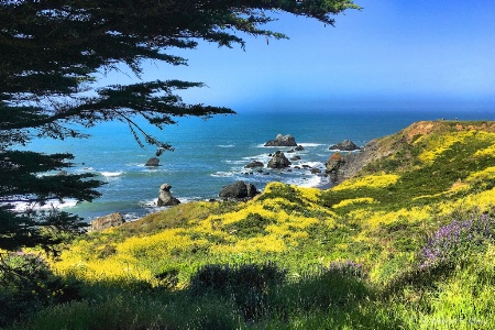 Spring Day at Sonoma Coast State Park