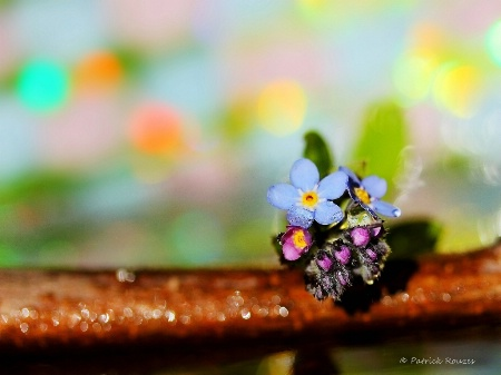 Little World Of Colors
