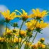 2Joy Of Spring. 1 - ID: 15576244 © Eric B. Stogner