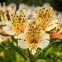 2Rushing Spring. - ID: 15576249 © Eric B. Stogner