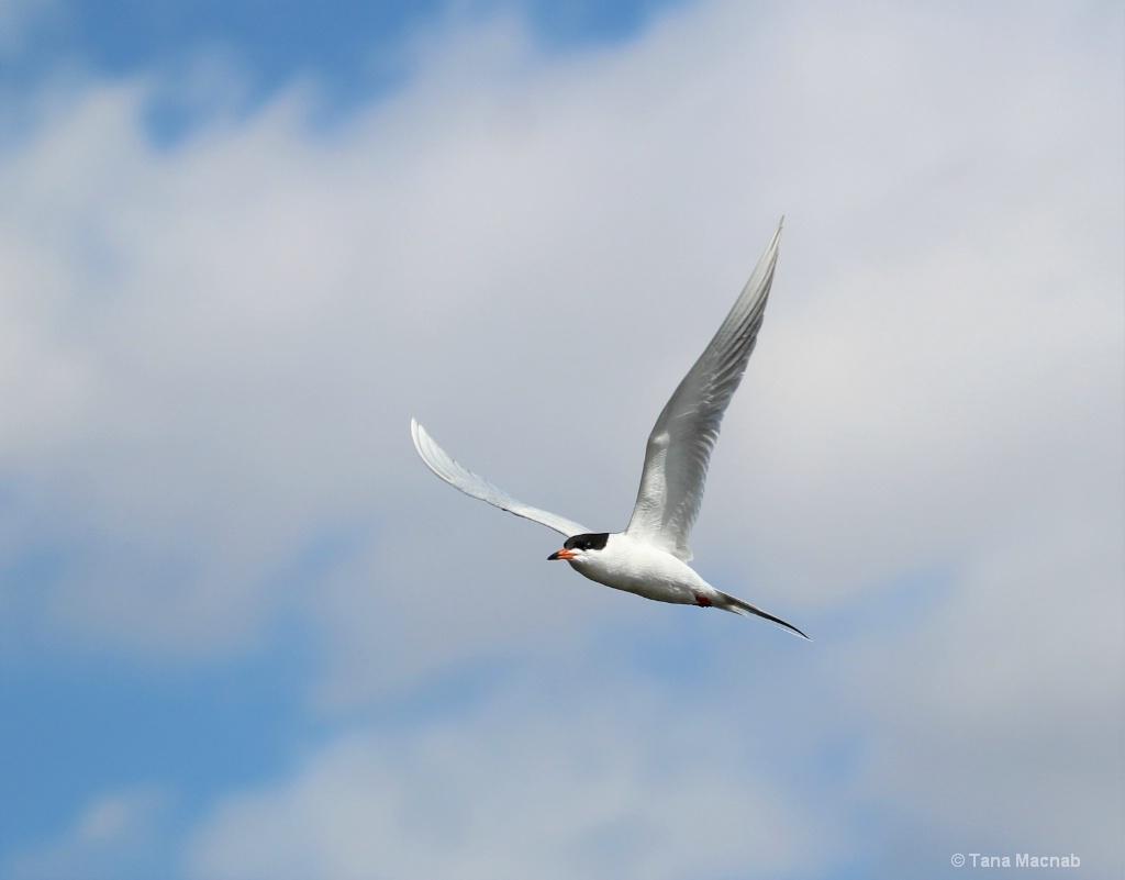 Graceful in Flight