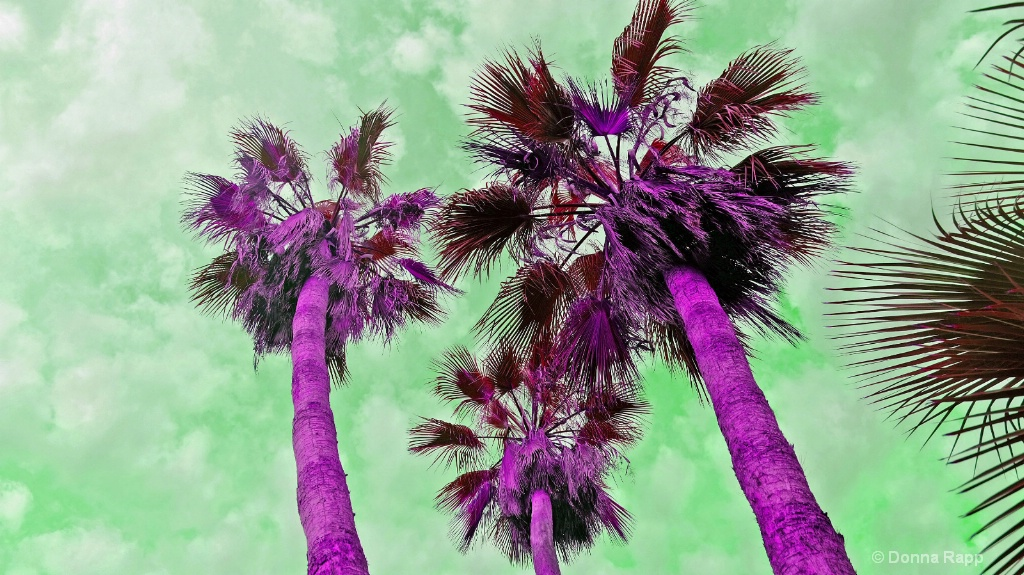 Baja under the palm colorized - ID: 15577422 © Donna Rapp