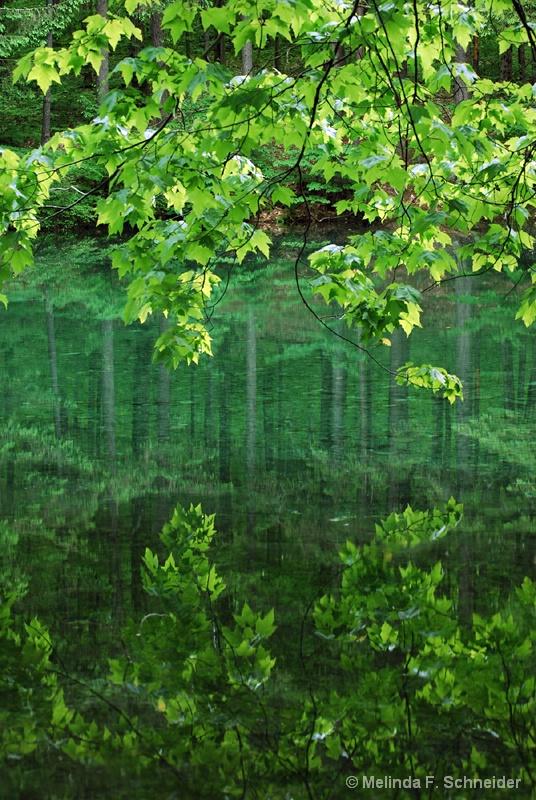 Leafy Green Pond