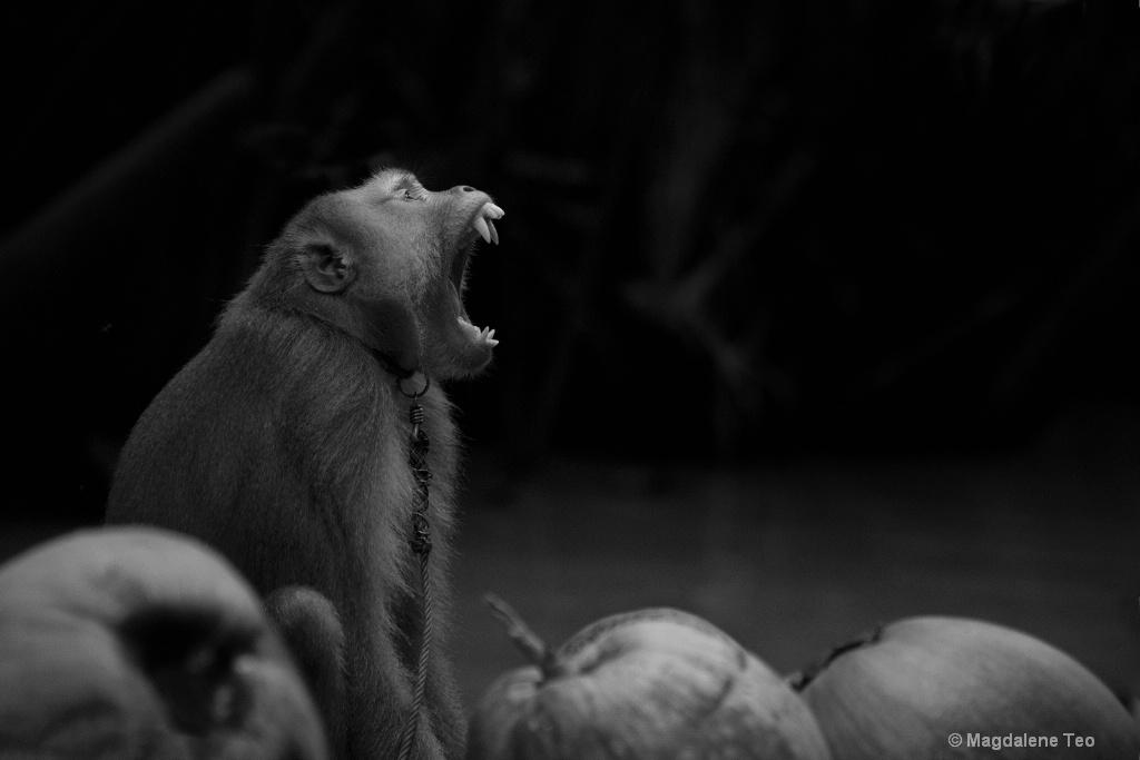 BnW - Monkey - ID: 15577820 © Magdalene Teo