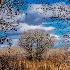 2Bosque del Apache ll. - ID: 15579451 © Eric B. Stogner