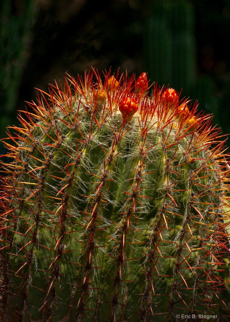 Light and Cacti Needles. - ID: 15579487 © Eric B. Stogner