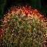 2Light and Cacti Needles. - ID: 15579487 © Eric B. Stogner