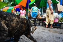 A cat in the market.